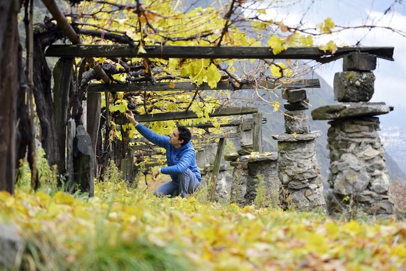 Aosta Valley wines