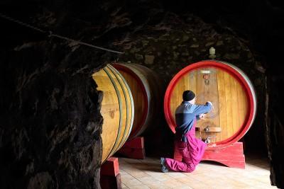 Campania - Excellent wines
