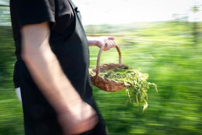 Croatia - Istria asparagus
