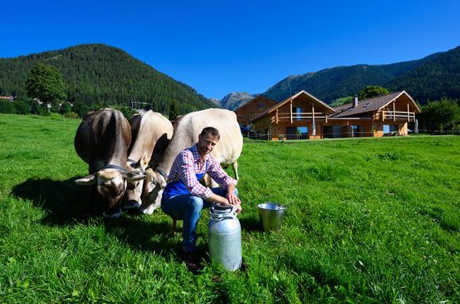 Milk in South Tyrol