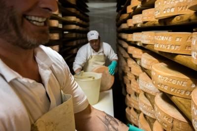 Trentino cheese